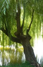 The Willow tree with the Diamond Ring by crazycookiez13