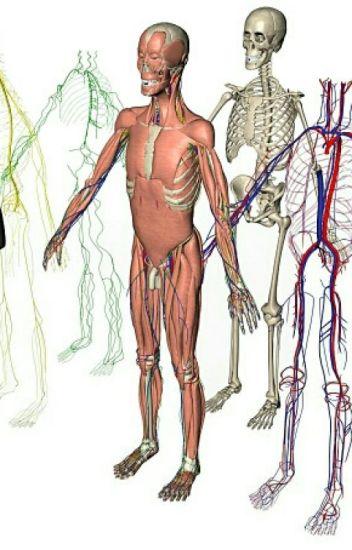 Anatomía, Fisiología Y Más - Kira110... - Wattpad