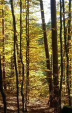 Die wahre Geschichte von Robin Hood by BeiThor