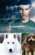 Jacob Black x Reader by MadiSugarCakes