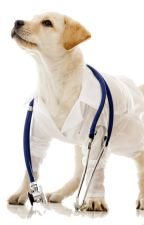 What is Veterinary Surgeon by aescentre