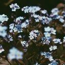 -floralis