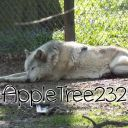 AppleTree232