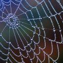Arachnid Weaver