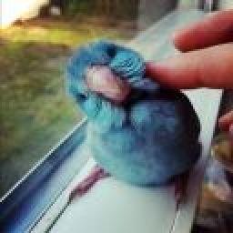 BLUEberryBIRD