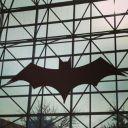 Batgirl6701