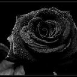 BlackPhotographs