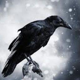 BlackWingedCrow