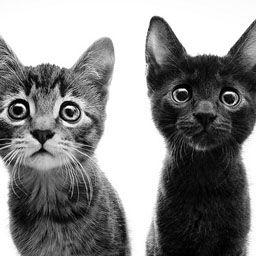 Black Butler x reader oneshots! - Claude and Sebastian x