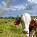 T.S. Valmond