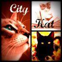 CityKat