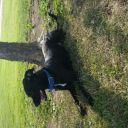 CowgirlofMidwest