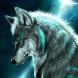Neo-Wolf  Coywolf35.256.137324
