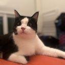 EmilyNguyen163