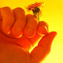 Flower_Thunderstein