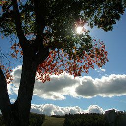 Jeff Hardy x Trish Stratus - What are we? - Wattpad Trish Stratus And Jeff Hardy Fanfiction