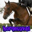 Horse_Lover