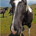 Horses1234567