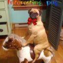 Interesting_pug