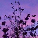 Purple Moonlight⭐️