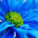 cœur bleu 🥀
