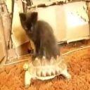 Lemondropcat