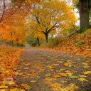 LoliGlaceon312