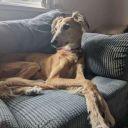 Lone-wolf-fanfics