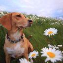 Nary Doggy
