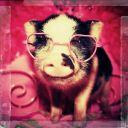 Nerdie_Piggie