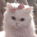 NurShaza