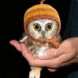 Owliee