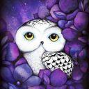 Owls1221