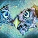 Owlynx