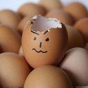 Pluma Real 2017