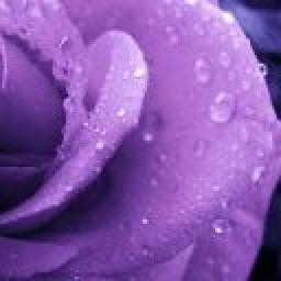 PurpleRain79
