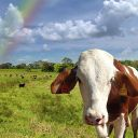Red~Kun
