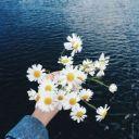 Rosaa_m