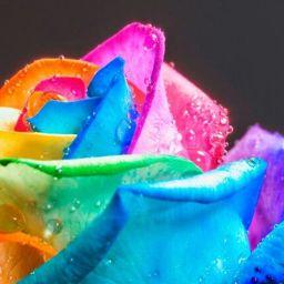 RosePrincess01