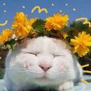 Sunshineeey