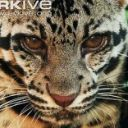TheCloudedLeopard