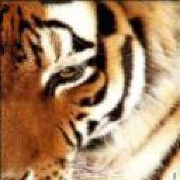 TigerBites