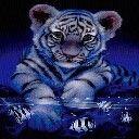 Tigeress14