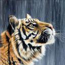 TigerxEye