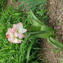 WesterosiWriter