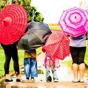 WilkorDirewolf