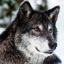 WolfWriterInc