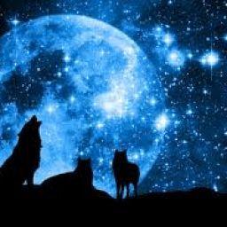 Wolf_Warrior1234