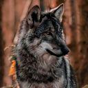 WolfiSalvatore