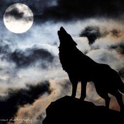 Wolfspotting